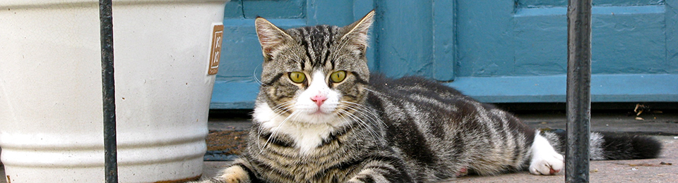 General Image - Cat8