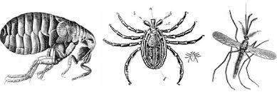 flea tick mosquito